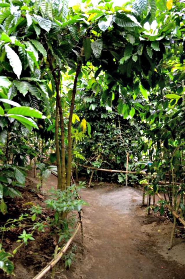 Bali Luwak Coffee Plantation, Denpasar, Indonesia ...  Kopi Luwak Coffee Plantations