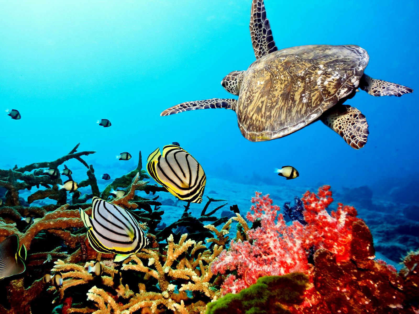 30 incredibly vibrant images of coral reefs and reef species - photo#31