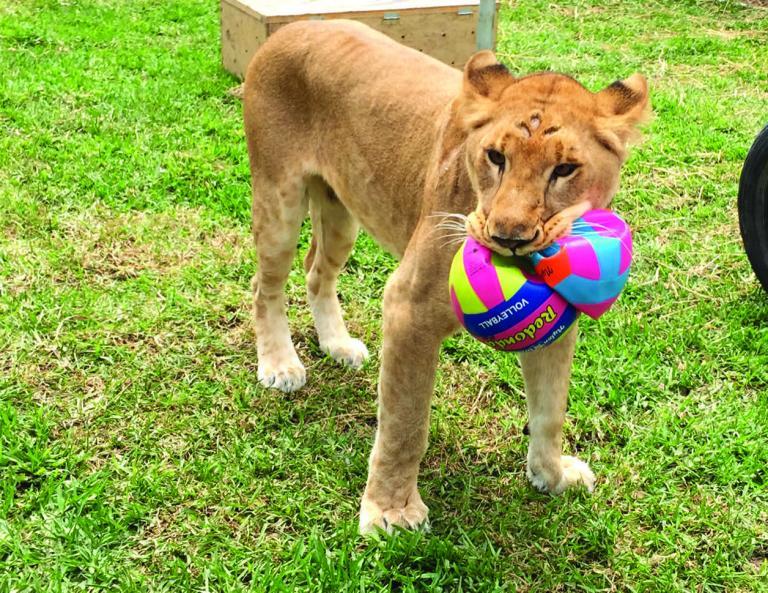 Tiny Lions Cat Rescue