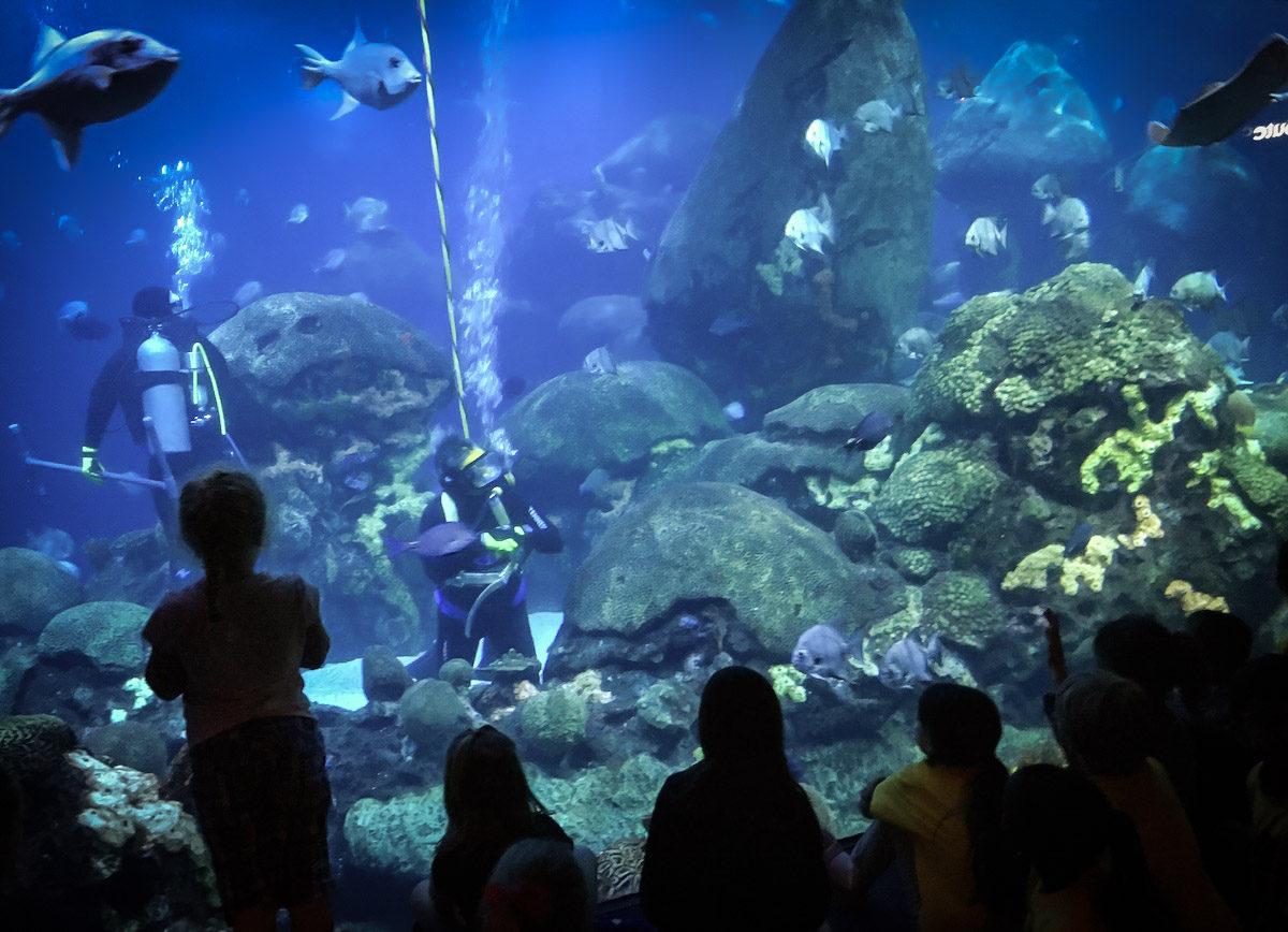 Justin Walter Chattanooga Tennessee Aquarium 02 Matador