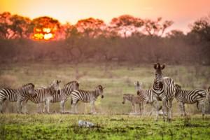 Singita: The Best Safari Lodges in All of Africa