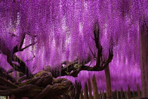 12 UNIQUE AND SPECTACULAR TREES AND FORESTS AROUND THE WORLD